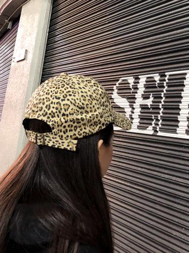狮子座冬青,帽子